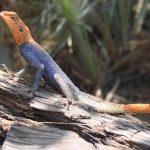 Faire de l'écotourisme en Namibie et explorer ses lieux d'intérêt