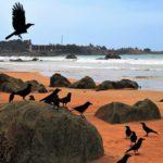 À la découverte d'une nature exceptionnelle à Sri Lanka